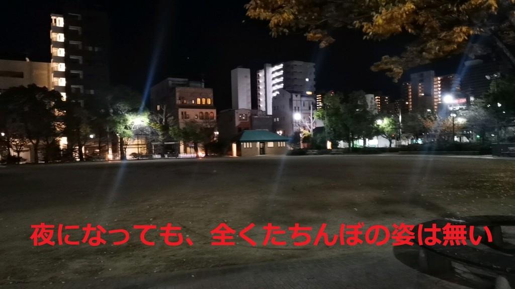 夜の松葉公園